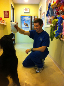 vet holding toy above dog head